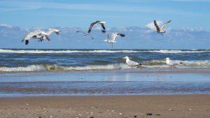 seagulls-029